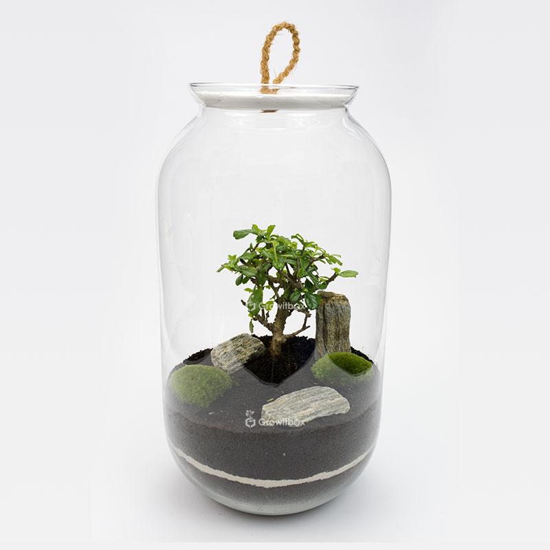 drzewko-kora-growitbox