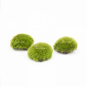 pillow moss mech poduszkowy