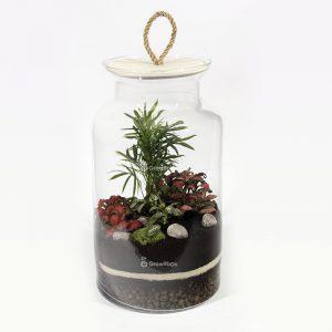 Las w słoiku growitbox