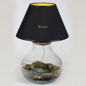 lampaterrarium